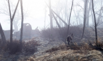 The lone wanderer and his dog (Dogmeat) explore the astounding beauty of the wasteland
